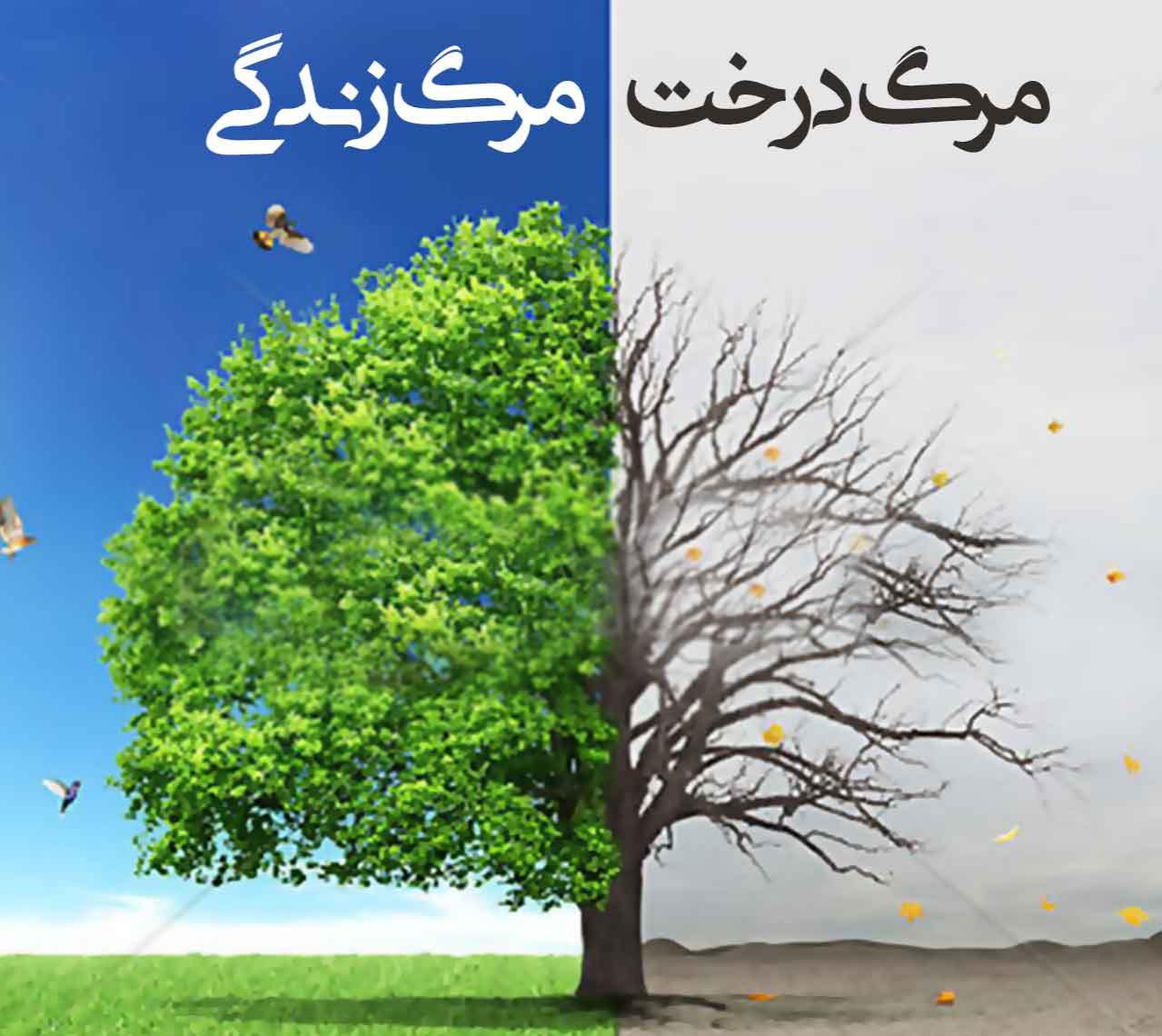 عزم شهرداری نیشابور بر رسیدگی و نجات درختان شهر